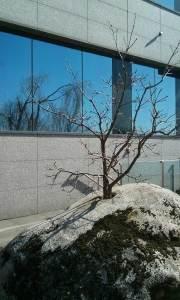 smal_tree